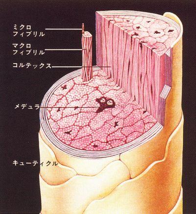 艶髪整形とは|縮毛矯正で行う日本初の毛髪結合再生法